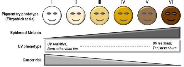Fitzpatrick Skin Tone Scale